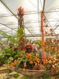 RHS切尔西花展2017年 世界` s显示在庭院设计的多数有名望的花展最好 图库摄影