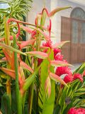 RHS Chelsea Flower Show 2017. A Heliconia flowering plant. RHS Chelsea Flower Show 2017. Closeup view of a  Heliconia flowering plant display Stock Image