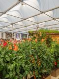 RHS Chelsea Flower Show 2017. Plants and flowers displays of the Great Pavilion. RHS Chelsea Flower Show 2017. Visitors observing plants and flowers displays of Stock Photo
