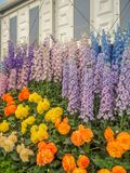 RHS Chelsea Flower Show 2017. Variegated begonias and delphiniums display. RHS Chelsea Flower Show 2017. Variegated begonias and delphiniums  display at the Stock Photo