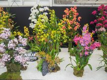 RHS Chelsea Flower Show 2017. Variegated orchids display. LONDON, UK - MAY 25, 2017: RHS Chelsea Flower Show 2017. Variegated orchids display Royalty Free Stock Photography