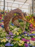 RHS Chelsea Flower Show 2017. Various flowers on the gold medal winner display in the Great Pavilion. RHS Chelsea Flower Show 2017. Various flowers on the gold Royalty Free Stock Photos