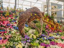 RHS Chelsea Flower Show 2017. Various flowers on the gold medal winner display in the Great Pavilion. RHS Chelsea Flower Show 2017. Various flowers on the gold Royalty Free Stock Photo