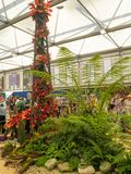 RHS Chelsea Flower Show 2017. Plants and flowers displays of the Great Pavilion. RHS Chelsea Flower Show 2017. Visitors observing plants and flowers displays of Stock Images
