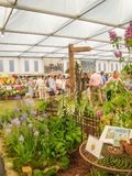 RHS Chelsea Flower Show 2017. Visitors observing plants and flowers displays of the Great Pavilion. RHS Chelsea Flower Show 2017. Visitors observing beautiful Royalty Free Stock Image