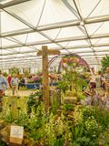 RHS Chelsea Flower Show 2017. Visitors observing plants and flowers displays of the Great Pavilion. RHS Chelsea Flower Show 2017. Visitors observing beautiful Stock Photography