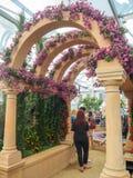 RHS Chelsea kwiatu przedstawienie 2017 Światowy ` s najwięcej prestiżowego kwiatu przedstawienia wystawia best w ogrodowym projek obraz royalty free