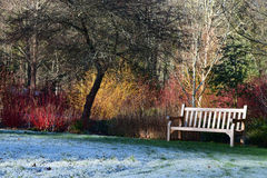 RHS Rosemoor Garden, Great Torrington, Devon. Garden Seat and Dogwoods at RHS Rosemoor Garden, Great Torrington, Devon in Winter Stock Image
