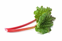 Rhubarb Stock Photo