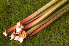 Rhubarb Royalty Free Stock Photo