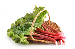 Rhubarb. Fresh picked Rhubarb in wicker basket on white background Royalty Free Stock Photography