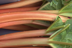 Rhubarb Imagem de Stock