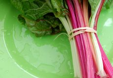 Rhubarb Fotos de Stock