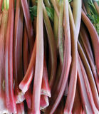 Rhubarb background. Full frame background with lots of rhubarb stalks Royalty Free Stock Photography