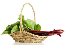 Rhubarb in a basket isolated Stock Image