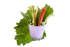 Rhubarb in the bucket Stock Photography