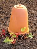 Rhubarb and a Clay Forcing Bell Royalty Free Stock Image