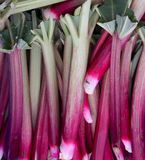 Rhubarb on display Stock Photography
