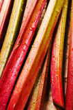 Rhubarb Royalty Free Stock Images