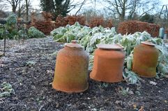 Rhubarb forcing pots stock image