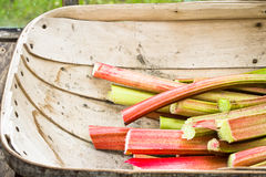 Rhubarb Stock Photos