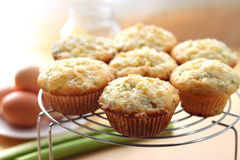 Rhubarb and ginger muffins. Rhubarb muffins with sugared ginger royalty free stock photos