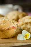 Rhubarb muffins Stock Photography