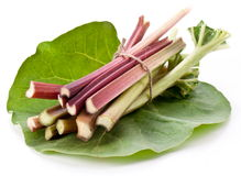Rhubarb stalks. Stock Images