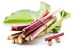 Rhubarb stalks. Stock Photography