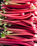 Rhubarb stems harvested ready to eat Stock Photography