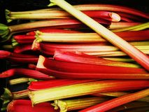 Rhubarb from Tacoma Farmer's Market. Rhubarb from Downtown Tacoma Farmer's Market royalty free stock photo