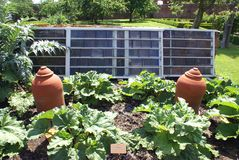 Rhubarb terracotta forcing pots in a vegetable garden. Royalty Free Stock Photography