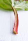 Rhubarb on white wooden table. Stock Photos