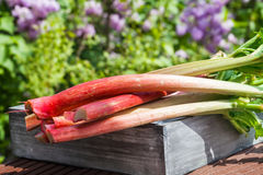 Rhubarb on wooden box Stock Images