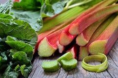 rhubarbe Photo libre de droits