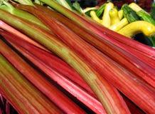 Rhubarbe fraîche Photographie stock libre de droits