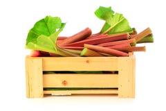 Rhubarbe fraîche dans la caisse en bois Photos stock