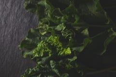 Rhubarbe organique se trouvant sur la pierre foncée Images libres de droits