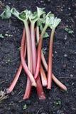 Rhubarbs Imagens de Stock Royalty Free
