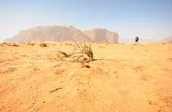 Rhum de Wadi photographie stock