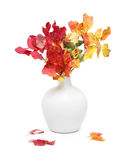 Rhus bouquet in white vase Royalty Free Stock Photo