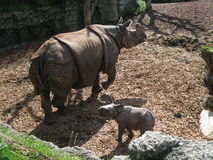 Rhynnoceros. With his baby at zoo royalty free stock photography