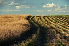 Rhythmische Reihe geschnittenes Gras zum Horizont Lizenzfreie Stockfotografie