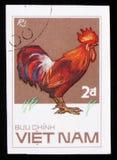 Ri雄鸡,从系列鸡品种,大约1986年 免版税库存图片