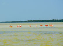 Ria Celestun biosfery rezerwa, Meksyk obrazy royalty free