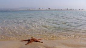 Ria Formosa View from Farol island. Algarve stock video footage