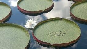 Ria-régia de ³ de Vità du jardin botanique photographie stock libre de droits