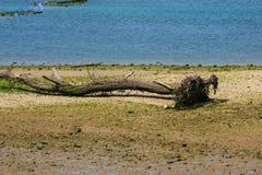 Ria Tina Minor. Boca de Nansa River. Municitabria.pality de Val de San Vicente, Cantábria, Foto de Stock