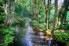 Riacho e floresta de Salgadelos na província de Lugo na Espanha Foto de Stock