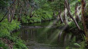 Riacho encantado com um córrego lento em uma floresta profunda vídeos de arquivo